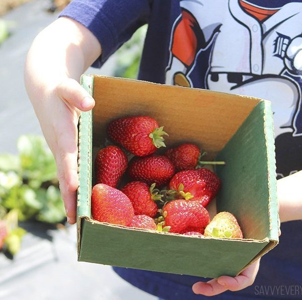 12 Tips for Berry Picking at a You-Pick Farm