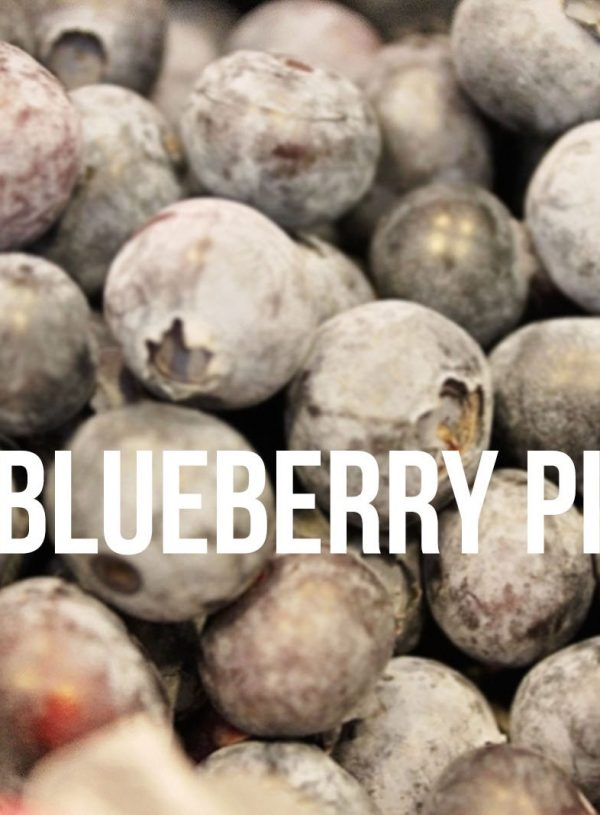 Blueberry Picking at Jessop Farms in Ripon, CA