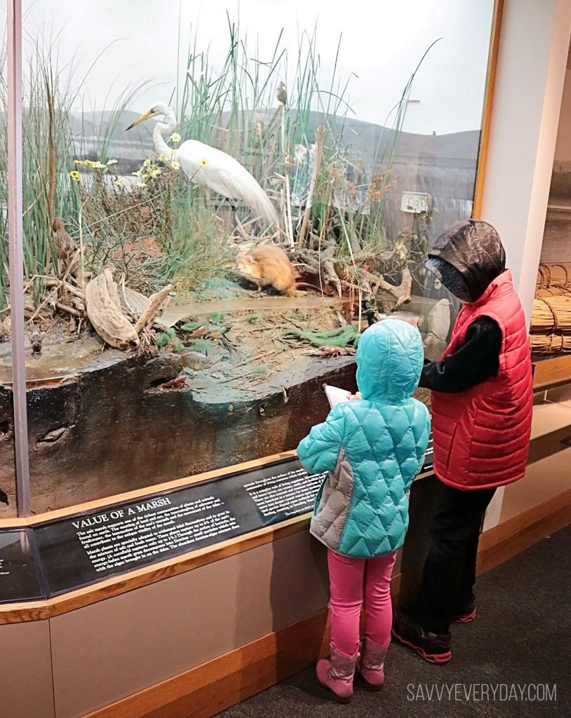 Kids looking at marshland inhabitants exhibit