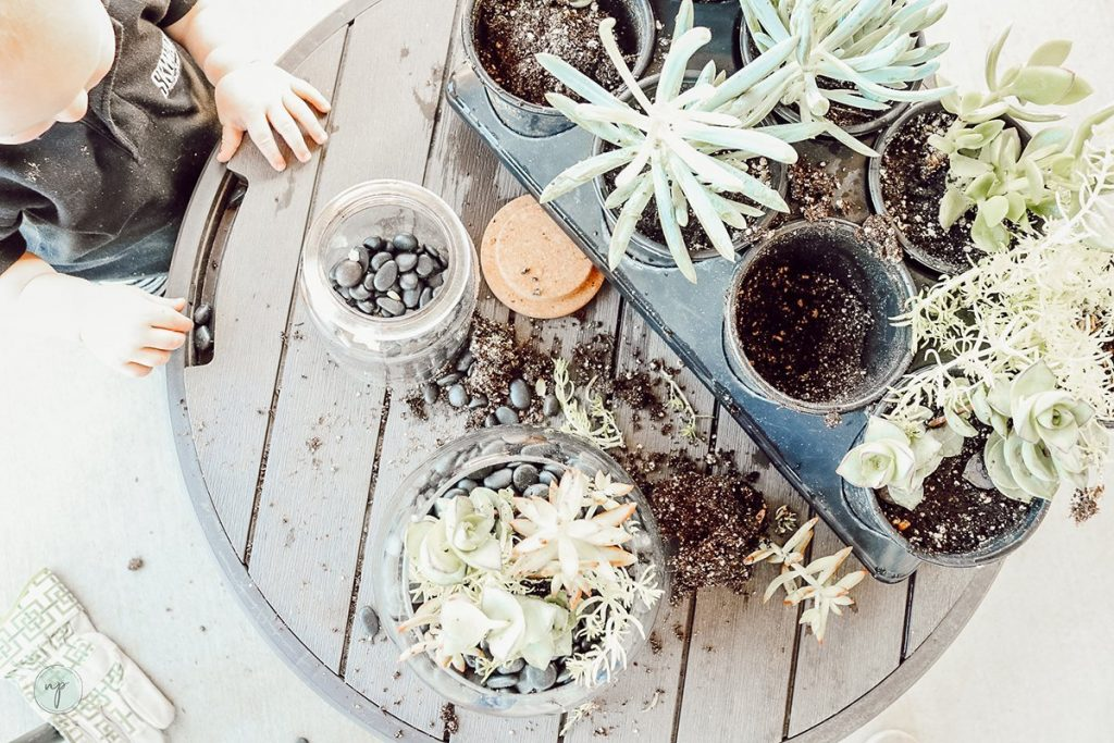 baby and succulent garden for indoor plant use