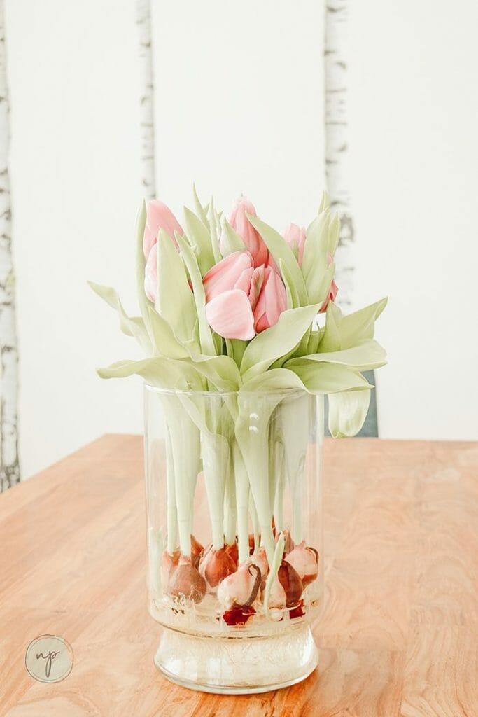 indoor plant- tulip vase