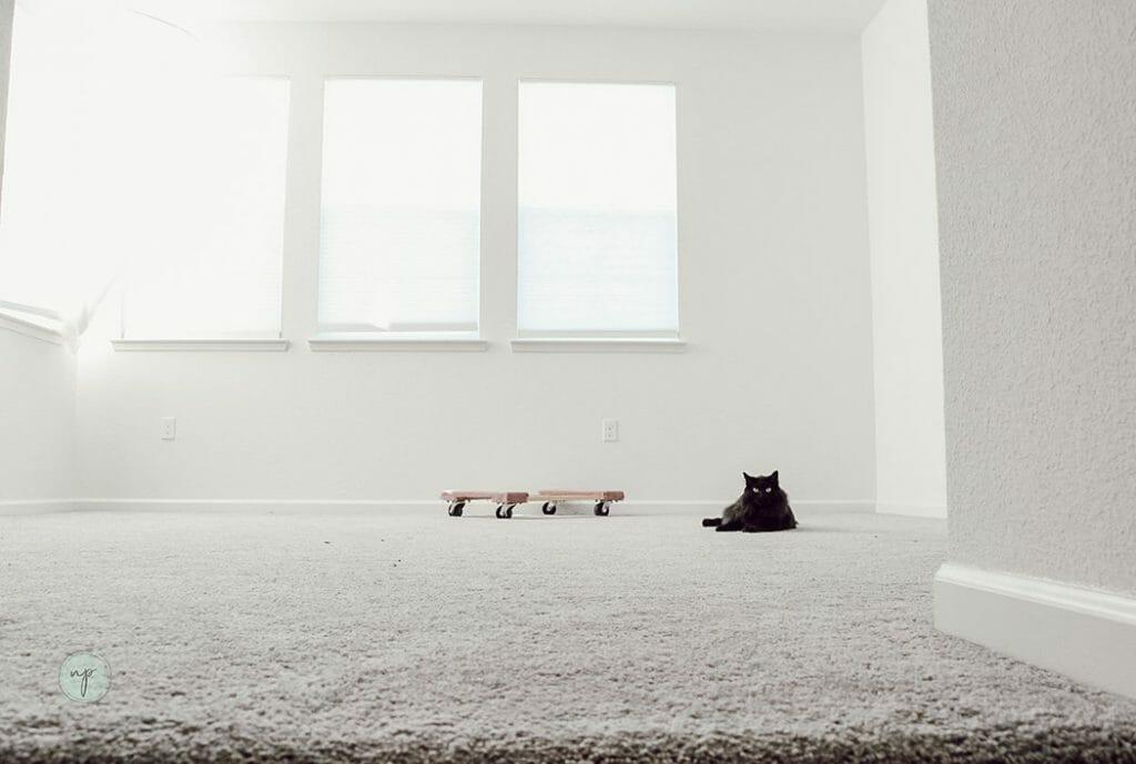 cat sitting in empty loft