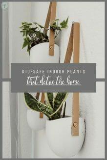 Kid-Safe Indoor Plants that Detox the Home