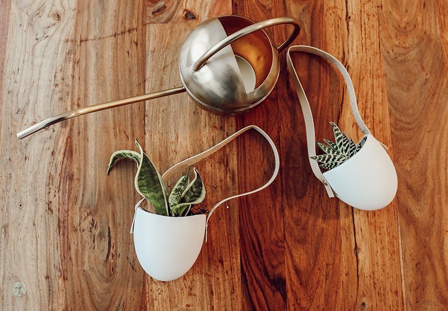 small potted snake plant and aloe vera plant lay on a table with a gold watering can